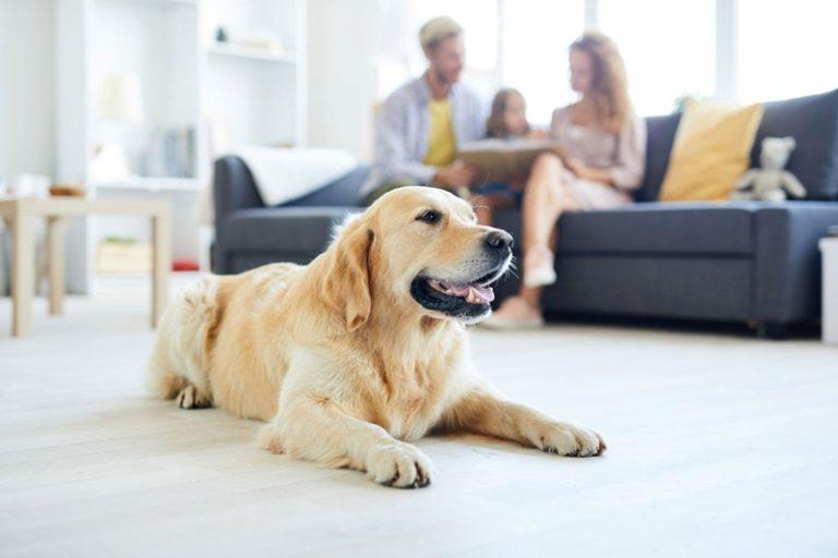 pets em apartamentos